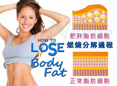 體脂肪如何燃燒
