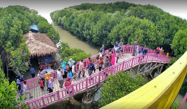 Serunya Menjelajah Hutan Mangrove Pandansari Brebes