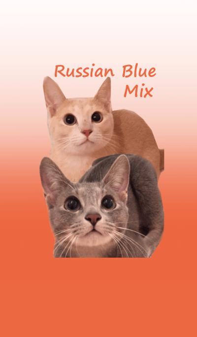 Russian Blue Mix