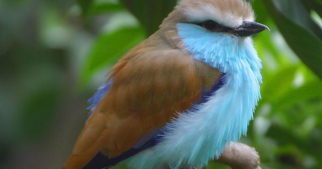 My Amazing Things Blog Beautiful Animals