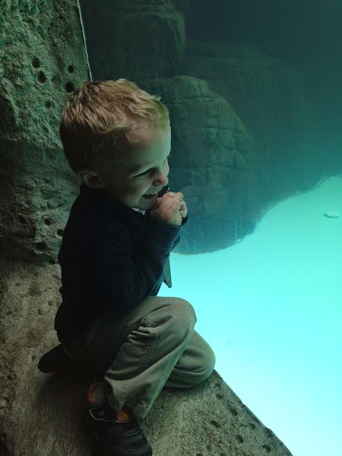 o at aquarium