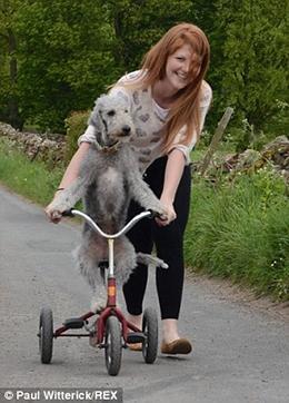 """Chú chó lái xe đạp, lướt xe hơi """"thần sầu"""""""