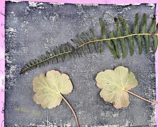 Wet cyanotype_Sue Reno_Image 265