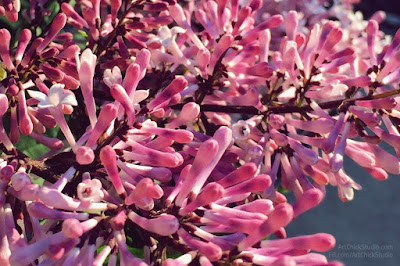 Lilacs in Bloom from Art Chick Studio