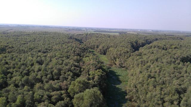 Khu rừng tràm bao la nhìn từ chòi quan sát cao 36m