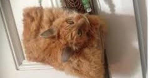 Borsa realizzata con un gatto morto...scusate ma c'è un limite alla follia umana?