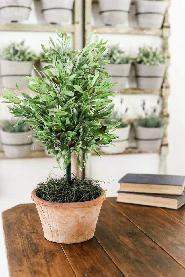Simple olive topiary tree