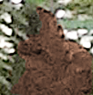 Recent photo of Bigfoot