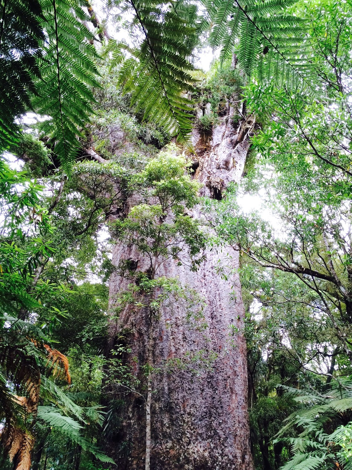 New Zealand's best hikes | Waipoua Forest