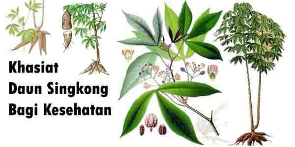 Manfaat luar biasa mengkonsumsi daun singkong bagi kesehatan