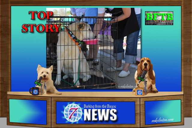 BFTB NETWoof News Top Story on adoption