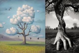 Copacii din vise