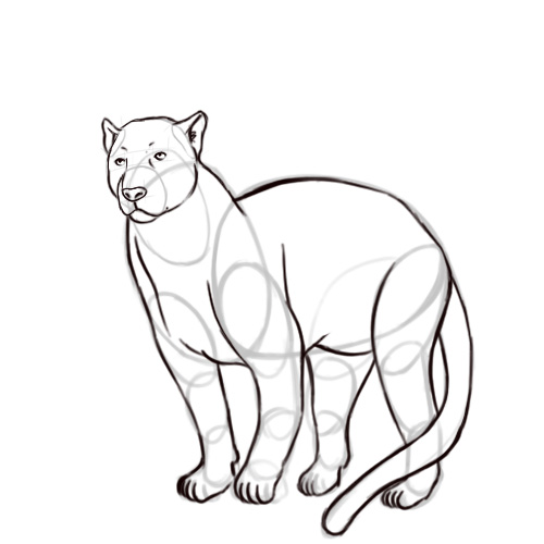 panther drawing outline - photo #44