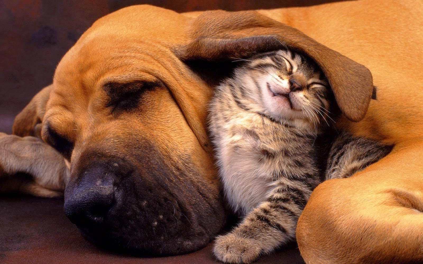 Cute dog and cat friends - photo#36