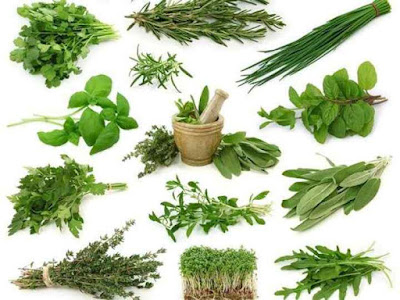 What herbs reduce appetite? Herbs for weight loss and reduce appetite