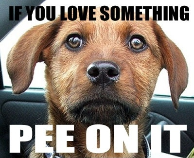 Funny Picture - If you love something...pee on it dog