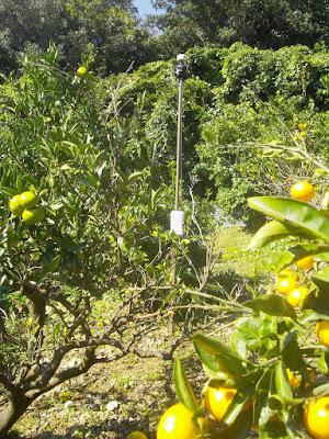 あわじ島で猿対策!! 害鳥からも守ります。