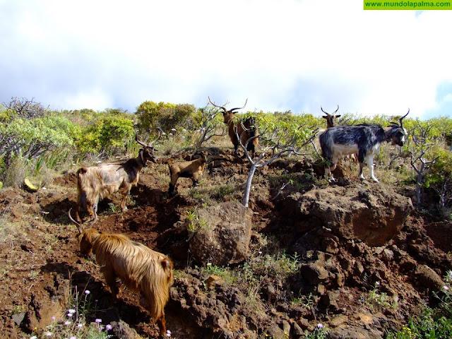 CC-PNC remite al Gobierno de Canarias un paquete de medidas en apoyo al sector primario de las islas