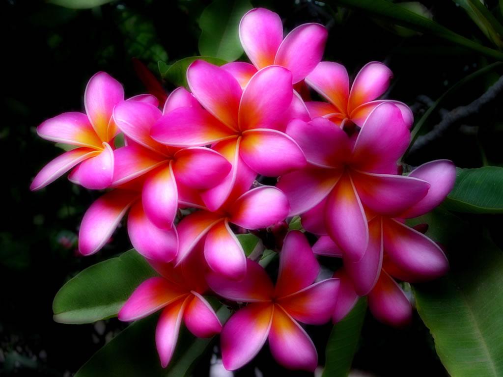 Hawaiian Flowers Flowers Online 2018 Flowers Online