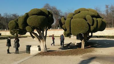 Árboles del Retiro