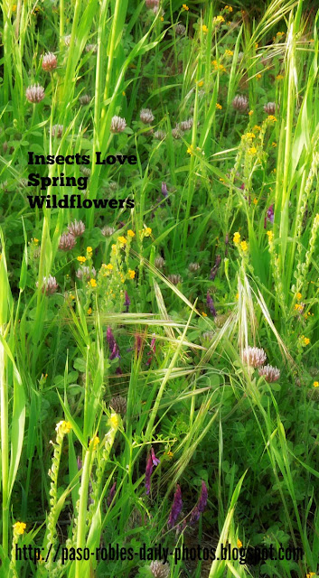 Insects Love Spring Wildflowers
