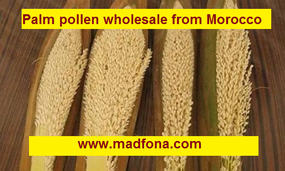 Palm pollen wholesale from Morocco