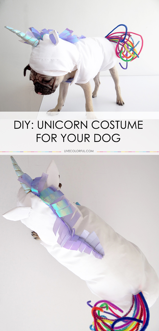 How to make a DIY unicorn costume for your dog
