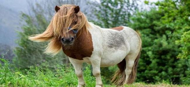 pony-preso