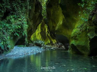 NZ, New Zealand, Wairarapa, Martinborough, Patuna Chasm, River, Moss