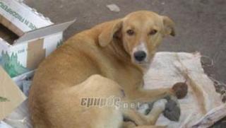 Νεαροί έδεσαν σκύλο σε μηχανάκι και τον έσερναν για 3 χιλ. μέχρι που το ζώο ξεψύχησε