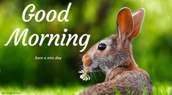 good morning nature with rabbit