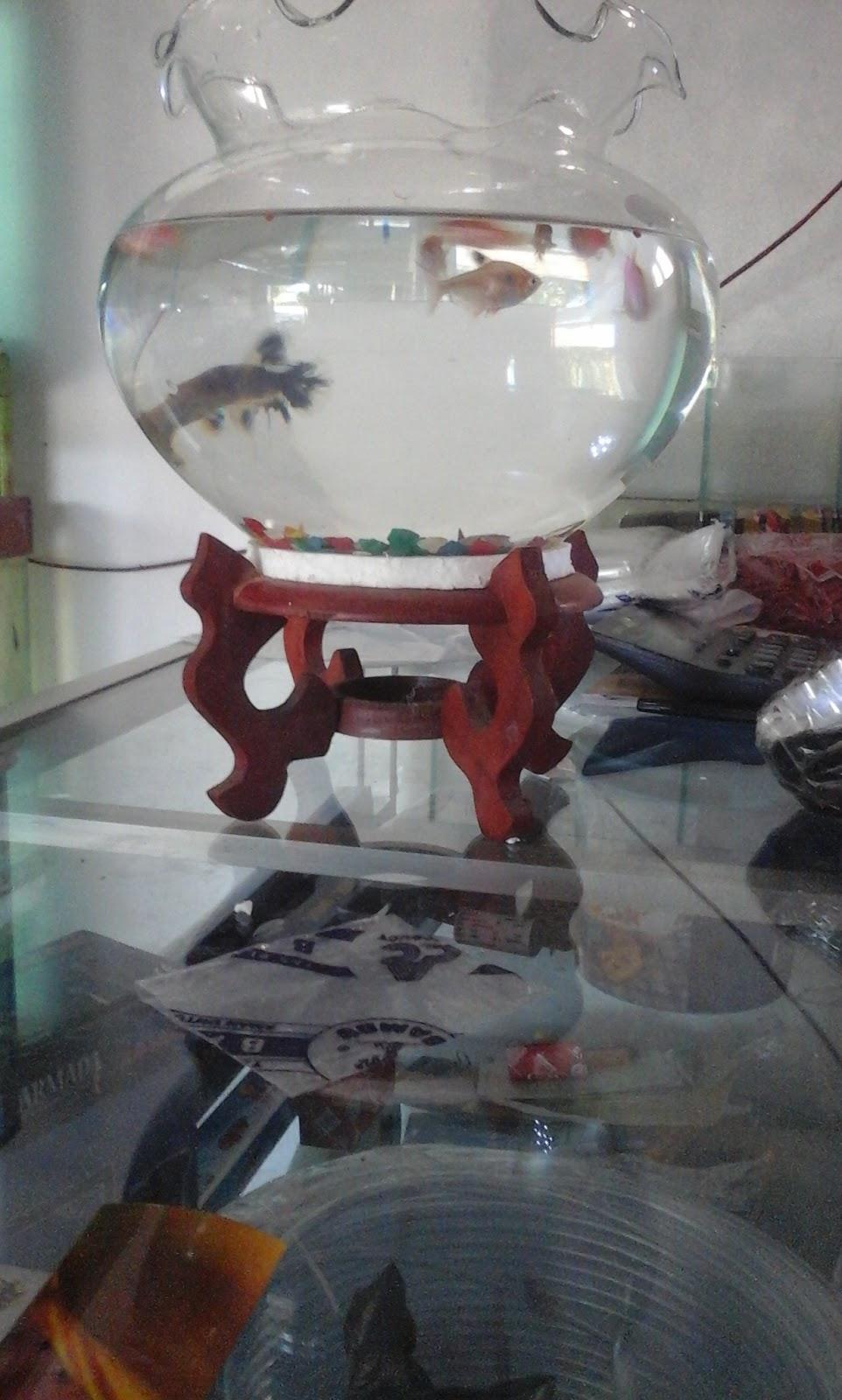Aquarium Bulat Ikan Hias Aquarium