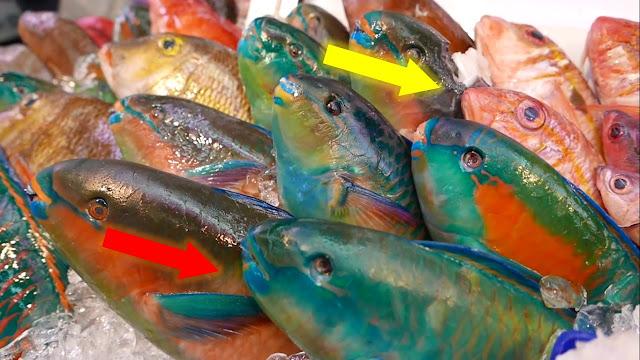 هل سبق وأن شاهدتم مثل هاته الأسماك؟