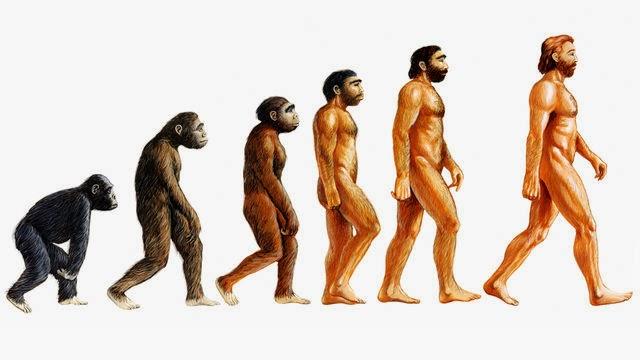 Benarkah Manusia Berasal Dari Kera?
