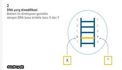 Ilmuwan Berhasil Ciptakan Bentuk Kehidupan Semi-Sintetik