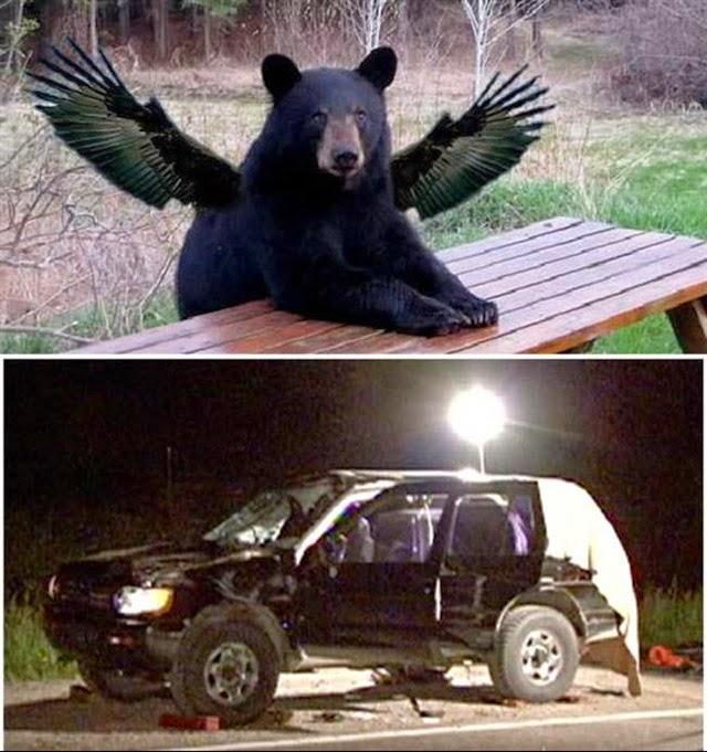 mortes bizarras, mortos por urso voador
