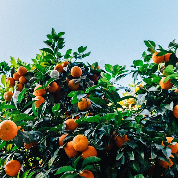 CITRUS SCENTS OF THE SUMMER