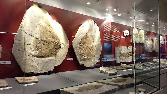 Visitare il Museo dei Fossili dei Bolca
