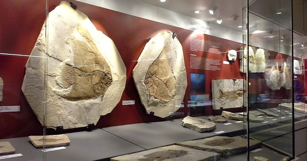 Bolca: il Museo dei Fossili