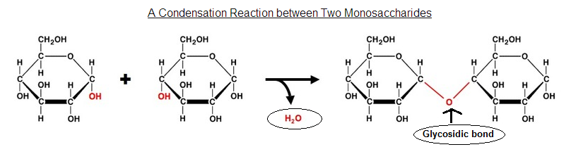 condensation synthesis ('condensation' referring to a consequence of having water around)  in  dehydration synthesis the small molecule that is lost is water and this.