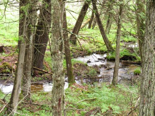 Walton Outlet Creek