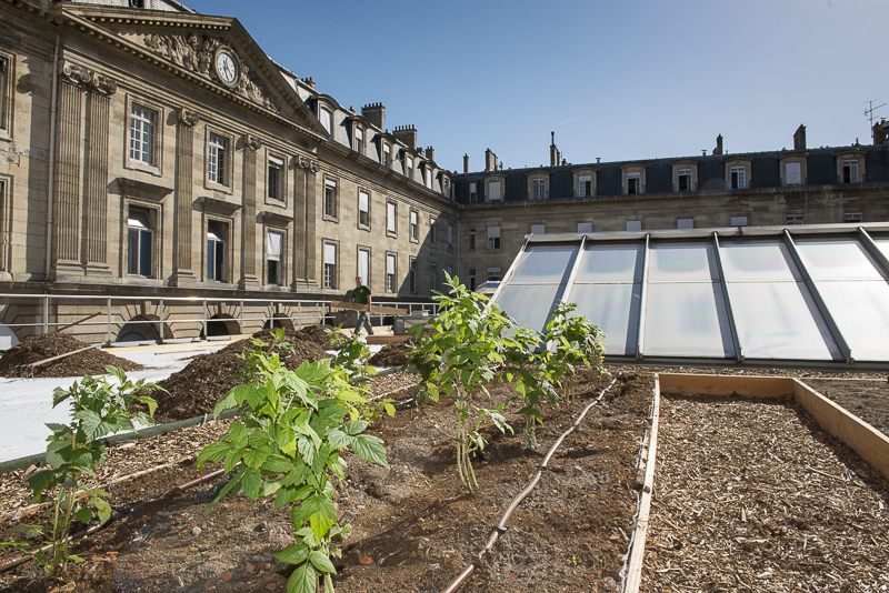 Huerto en la azotea del Ayuntamiento de París