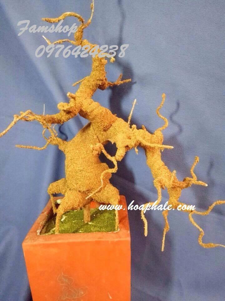 Goc bonsai mai dao o Co Tan
