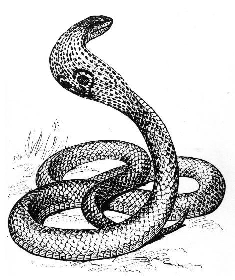 Fonds D Ecran Hd Dessin De Serpent A Imprimer