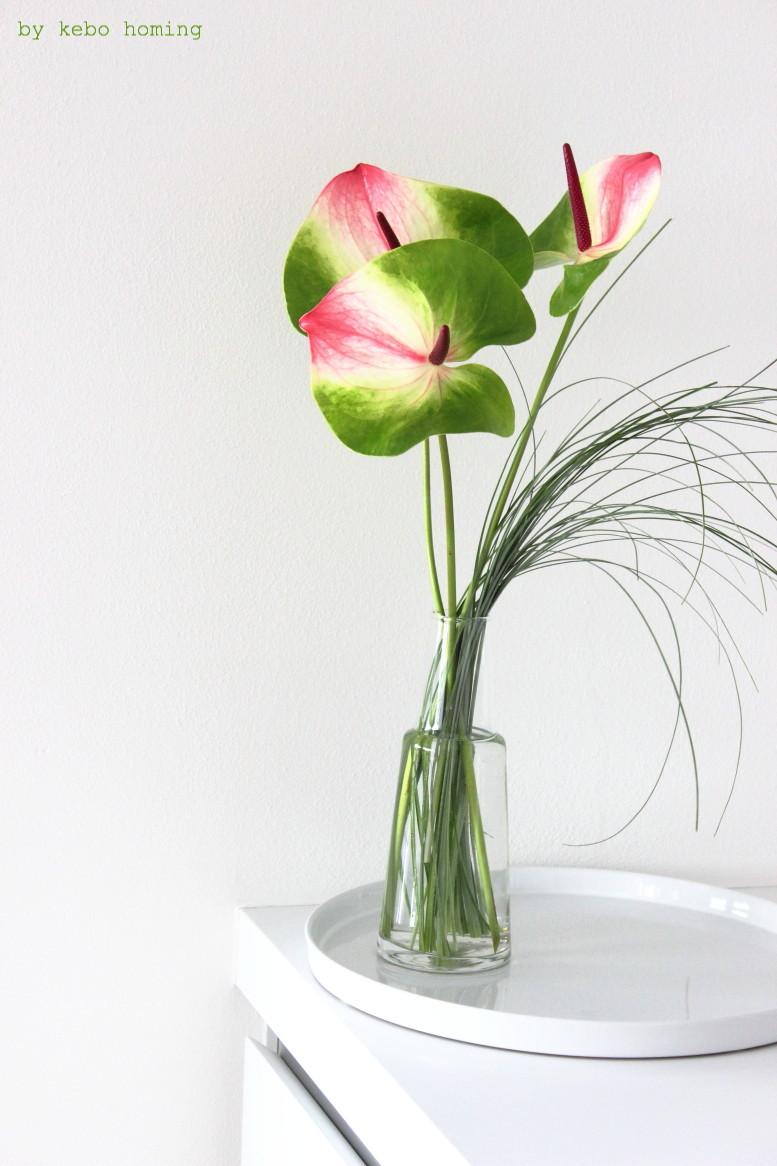 Besondere Anthurien in grün pink für die Blumen am Freitag bei kebo homing, dem Südtiroler Food- und Lifestyleblog