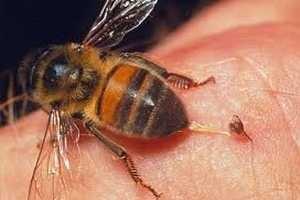 Picotazos de abejas para sanar - Bee stings to heal