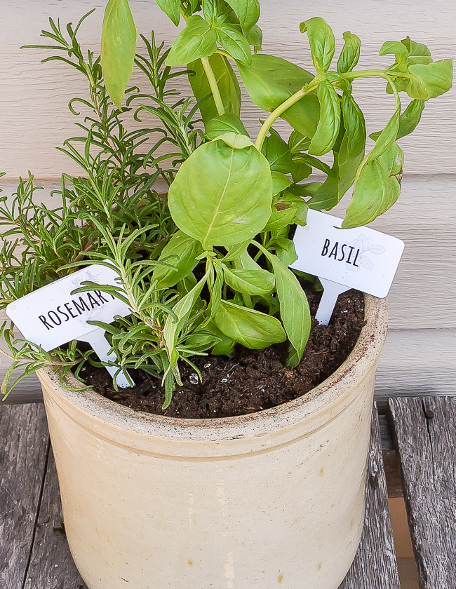 DIY Dollar Tree garden herb markers and free printable
