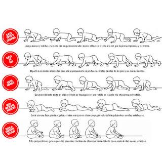 gatear es fundamental la importancia del gateo y su estimulación rodillo rulo gateo bebé
