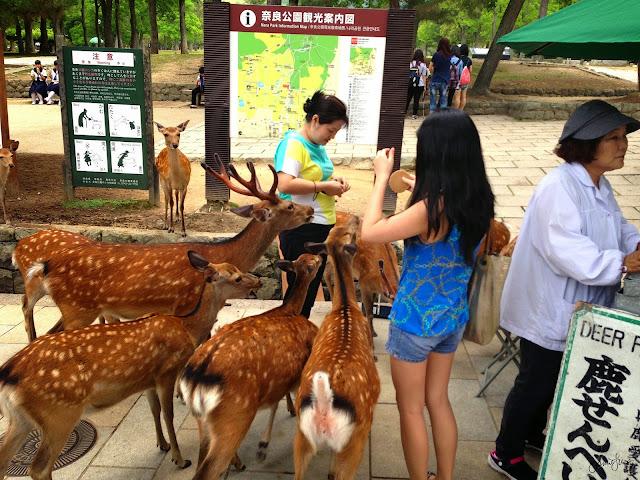 Deer at Nara Park, Japan