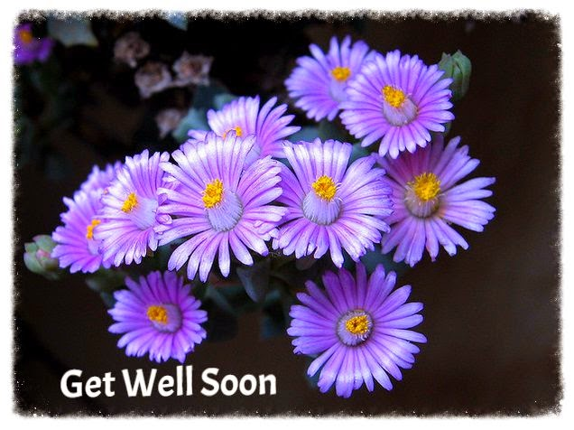 get well Oscularia